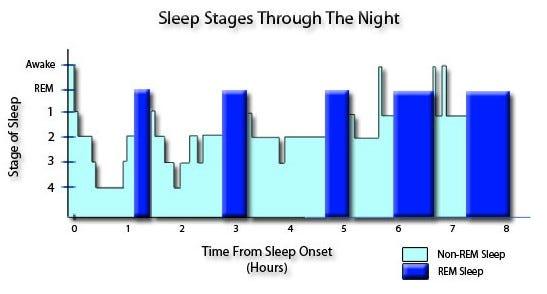 Diferencias entre el sueño REM y No REM